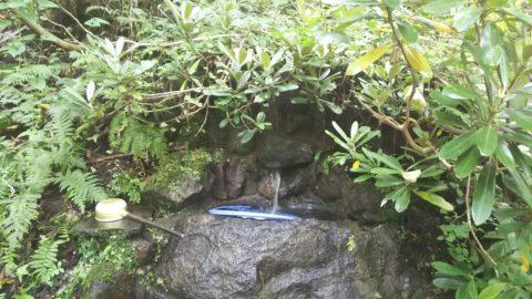 龍ヶ窪の池