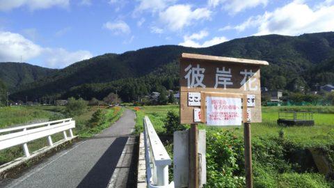 草野川(彼岸花群生地)