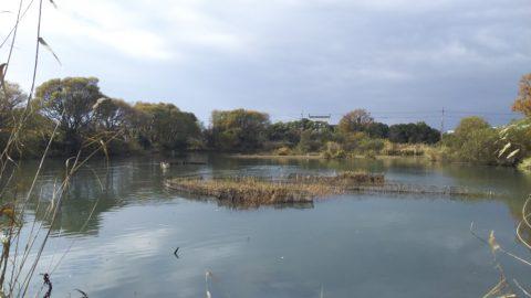 琵琶湖「湖岸緑地 細江」