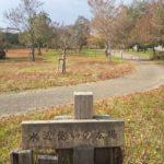琵琶湖畔のデイキャンプ・休息にオススメの無料スポット「湖岸緑地 細江」