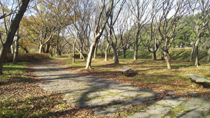 琵琶湖「湖岸緑地 川道-2」