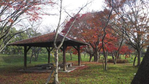 琵琶湖「湖岸緑地 川道-3」