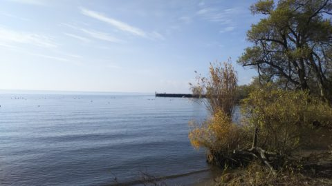琵琶湖「湖岸緑地 長浜南浜」
