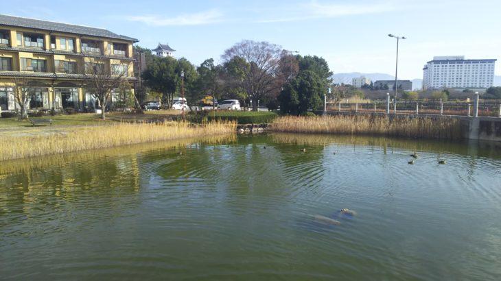 琵琶湖畔のデイキャンプ・バーベキューにオススメの無料スポット「湖岸緑地」
