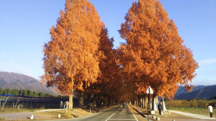 「BIWA-TEKU(ビワテク)」で「高島市 メタセコイヤ並木コース」を歩いてみた