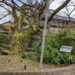 「BIWA-TEKU(ビワテク)」で「長浜市 「高月」観音の里と巨木コース」を歩いてみた