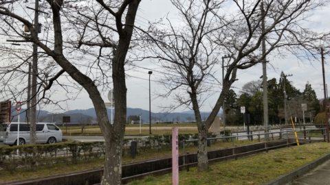 淡墨桜(高月町井口)