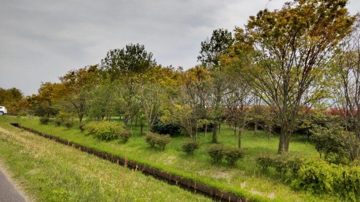 琵琶湖畔のデイキャンプ・休息にオススメの無料スポット「湖岸緑地 栗見新田」