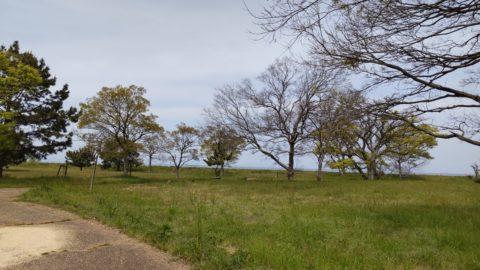 琵琶湖「湖岸緑地 栗見出在家」
