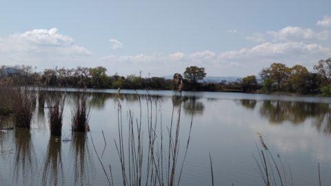 西の湖園地 湖岸緑地