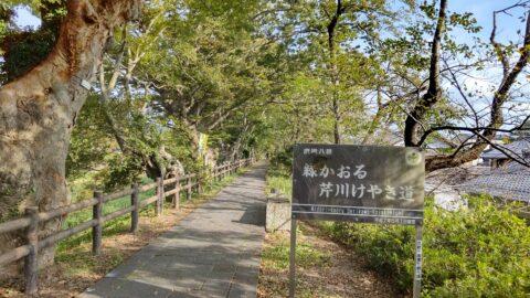 彦根八景「緑かおる芹川けやき道」看板前