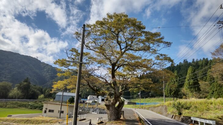 「BIWA-TEKU(ビワテク)」で「長浜市 余呉 丹生地域巡りコース」を歩いてみた
