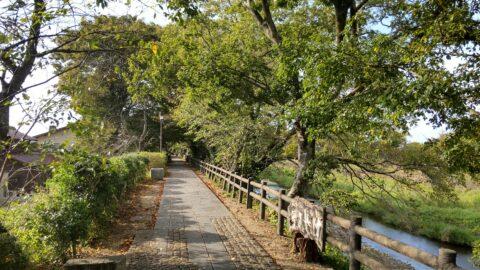 彦根八景「緑かおる芹川けやき道」