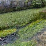 「BIWA-TEKU(ビワテク)」で「米原市 歩こう!「醒ヶ井」」を歩いてみた